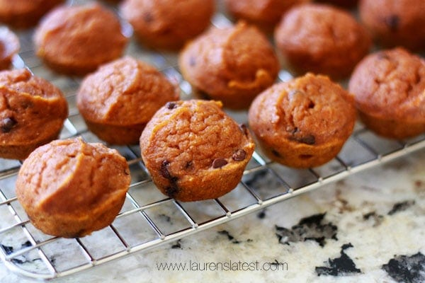 Mini Pumpkin Chocolate Chip Muffins on a cooling wrack