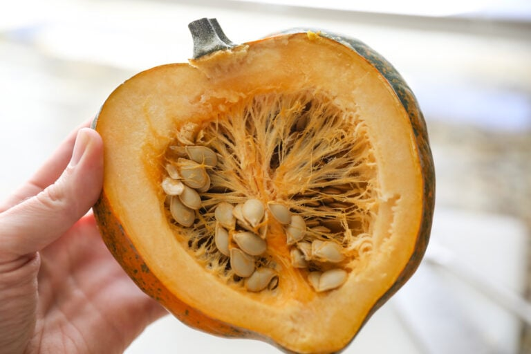 acorn squash cut in half with seeds and guts