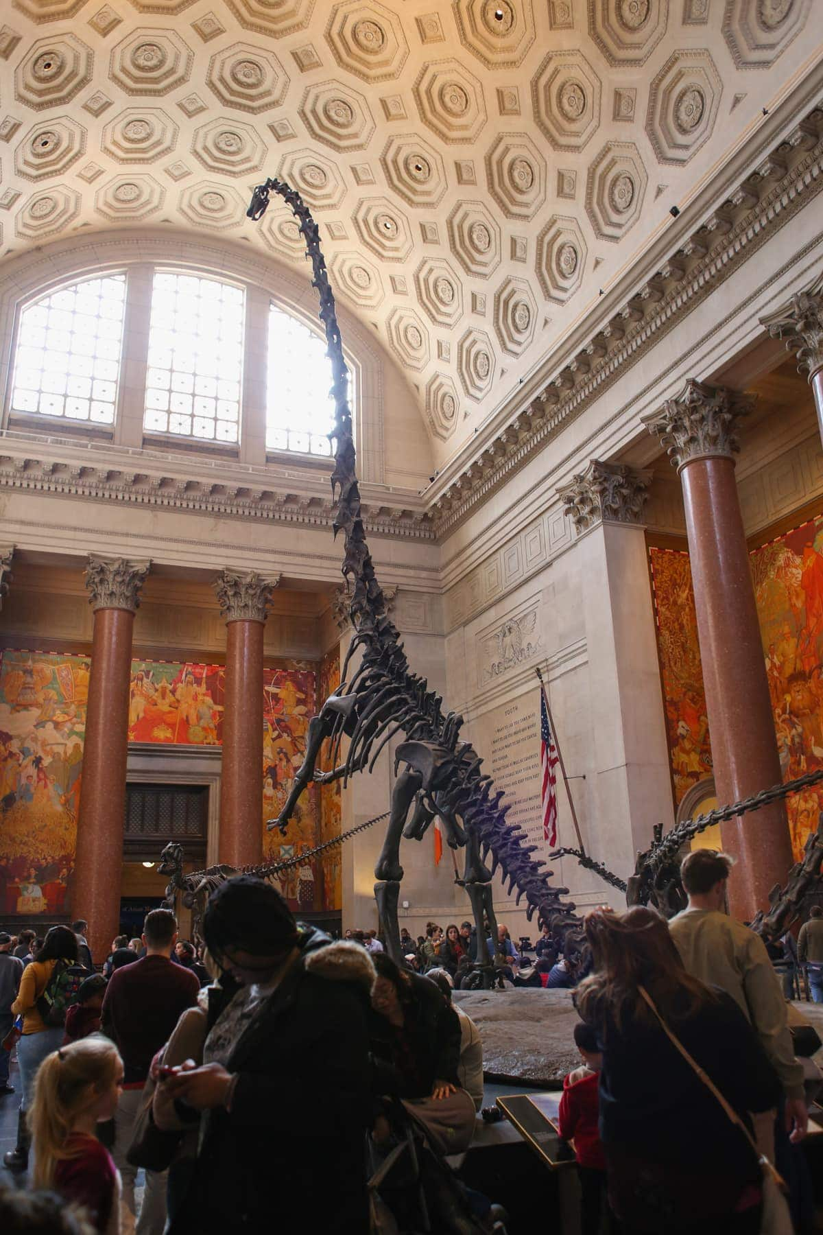 Inside the American Museum of Natural History