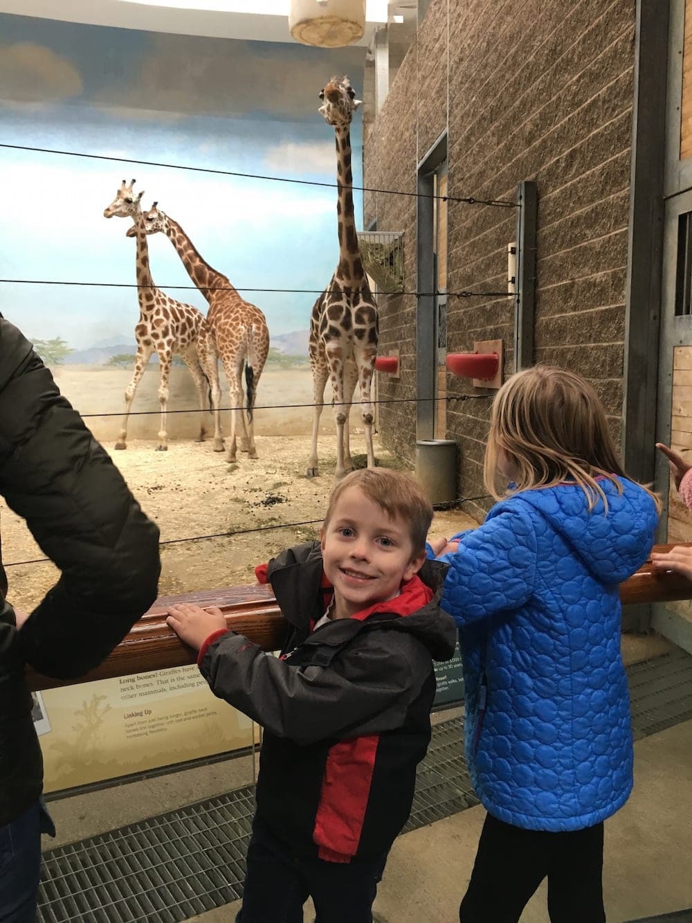 People looking at giraffes
