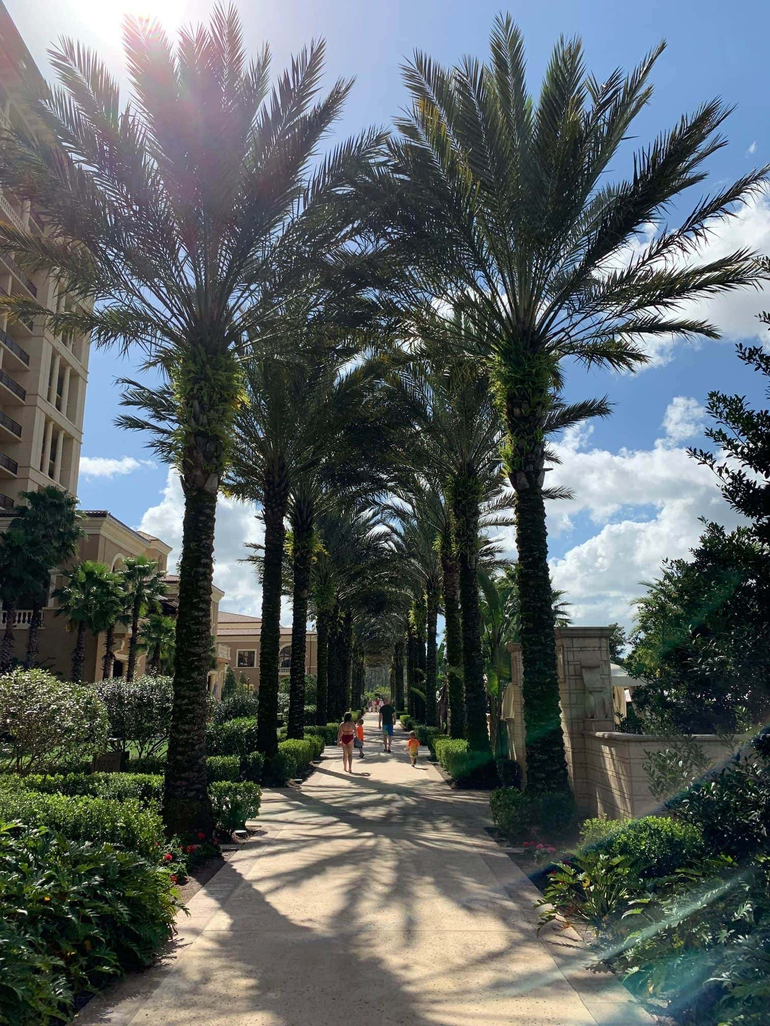 people walking down a path lined with palm trees