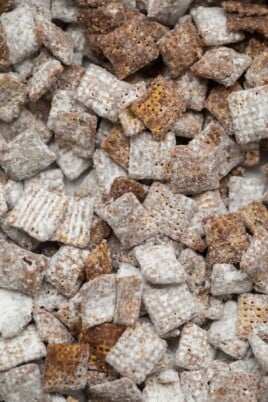 Close-up of puppy chow