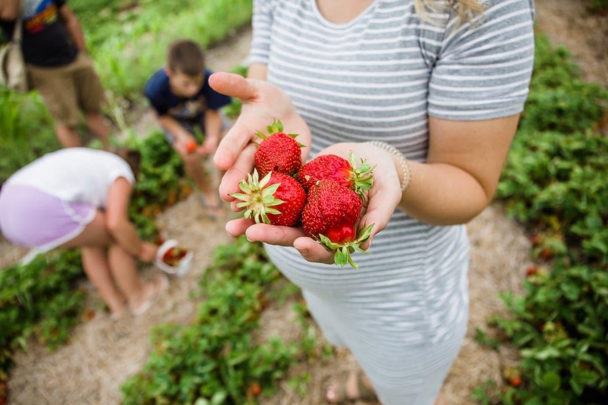 Lauren holding strawberries in hands