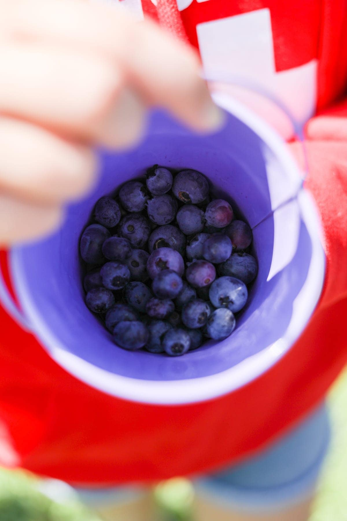 A close up of a bucket of blueberries