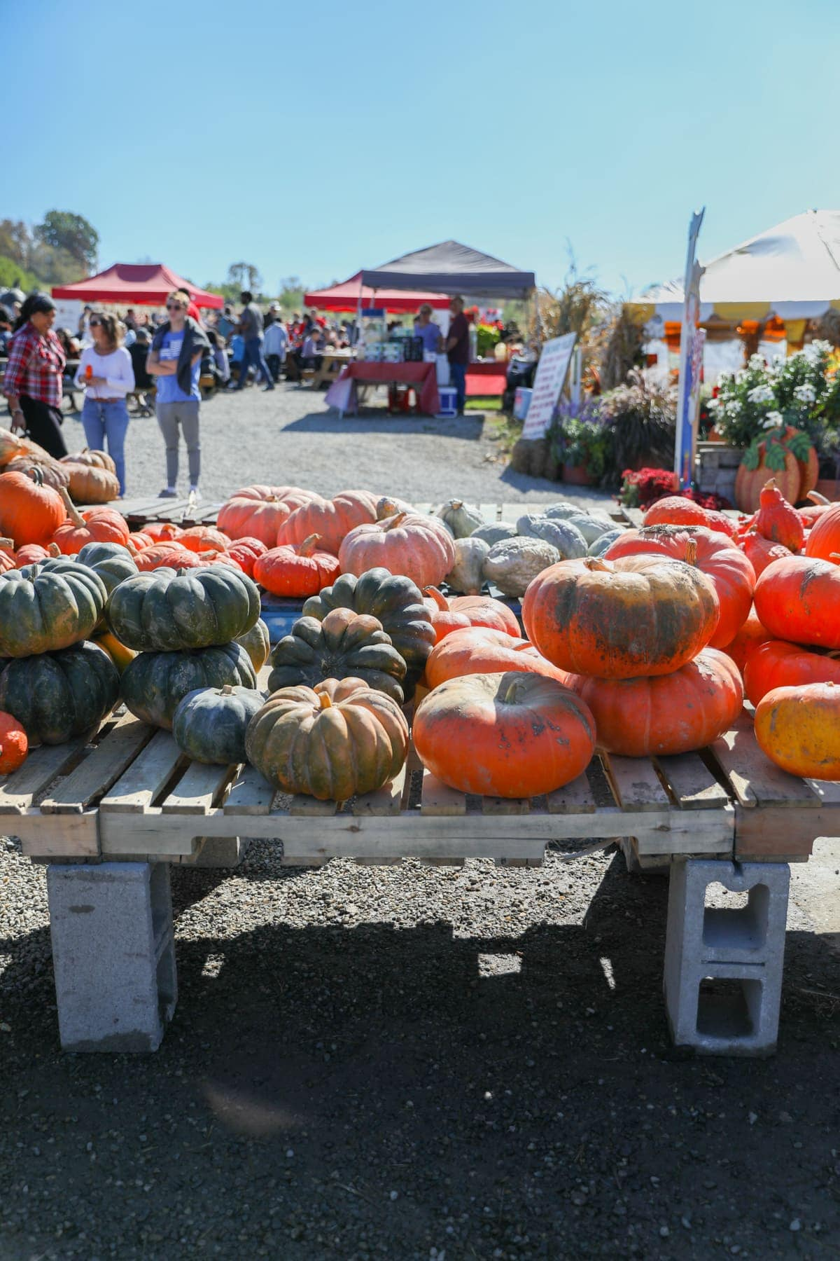 A table of pumpkins