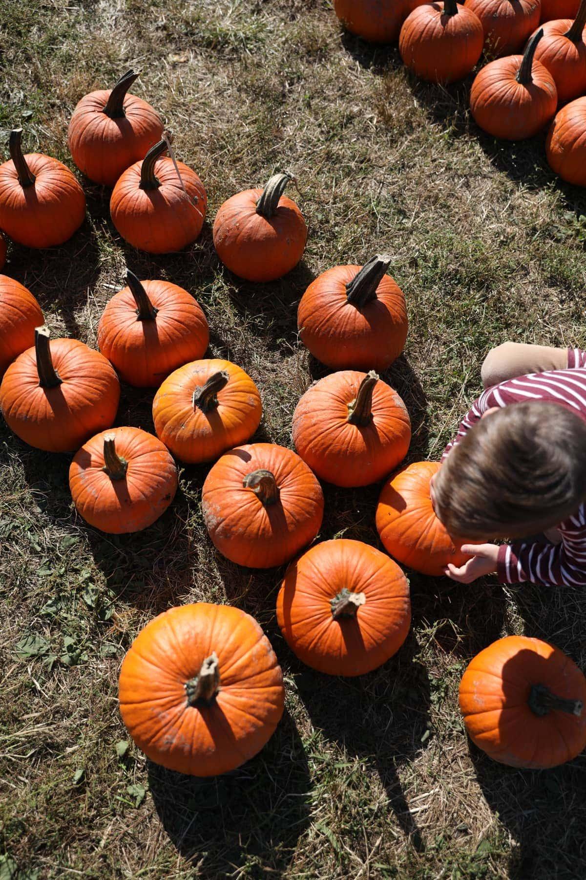 Brooke picking out a pumpkin