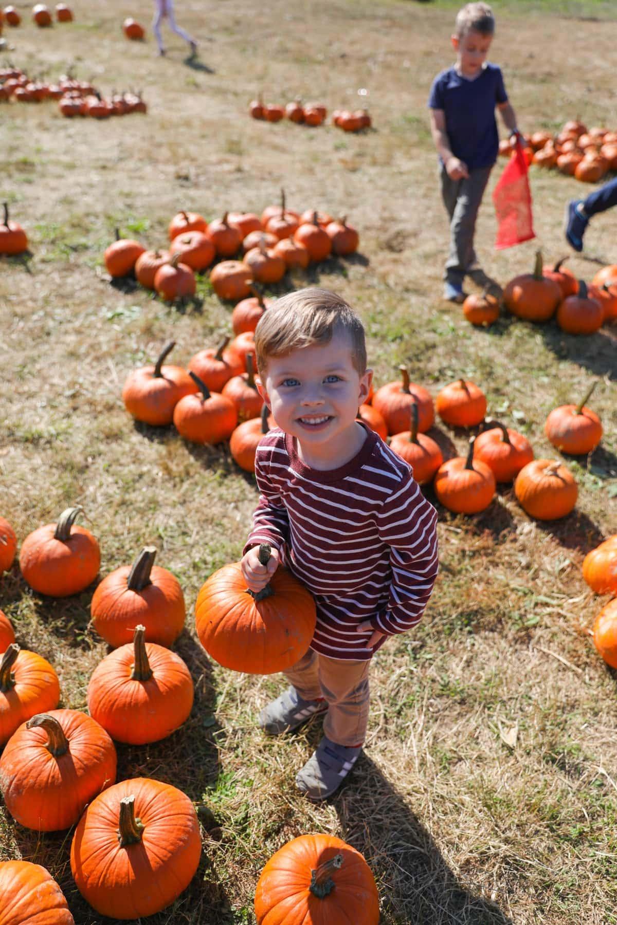 Eddie in a field of pumpkins