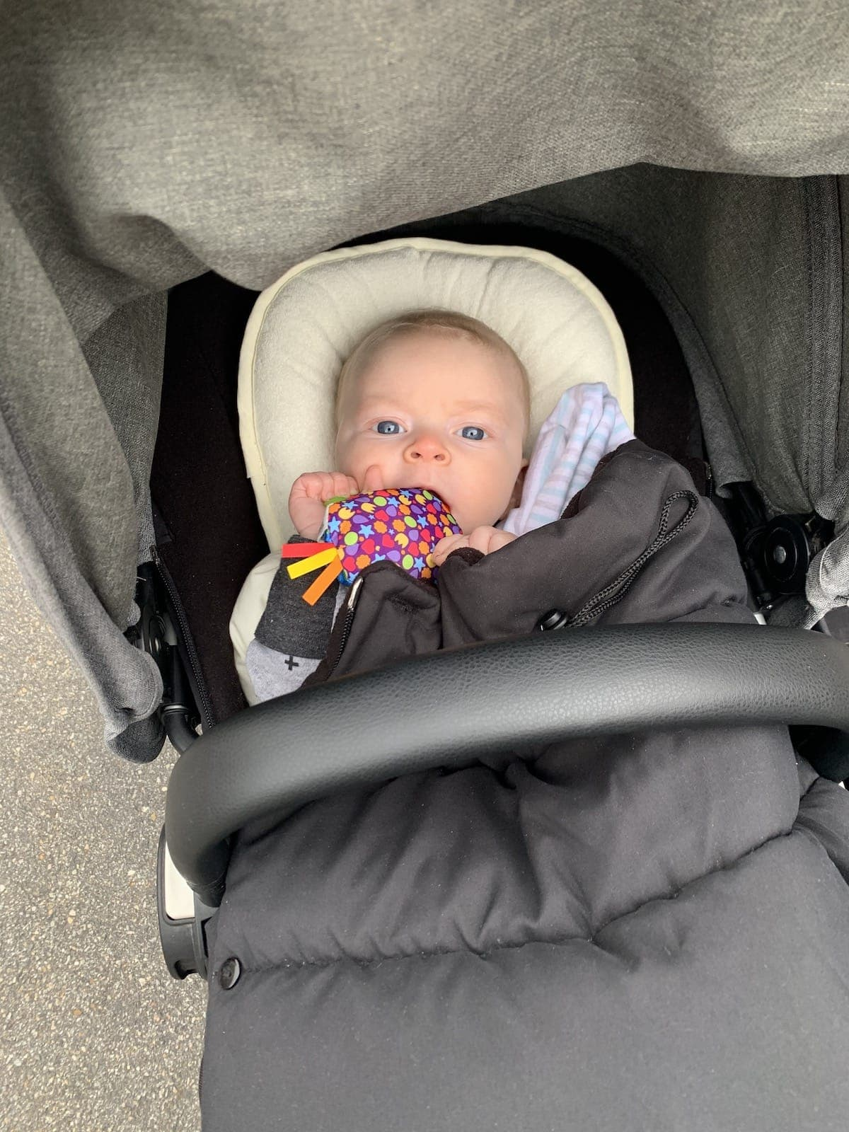 Porter in a stroller