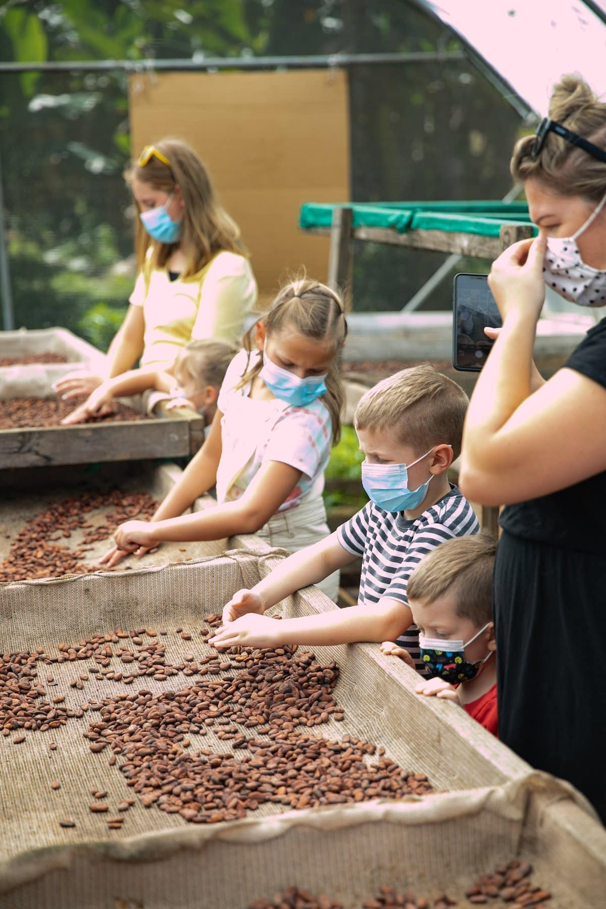 kids looking at dried cacao